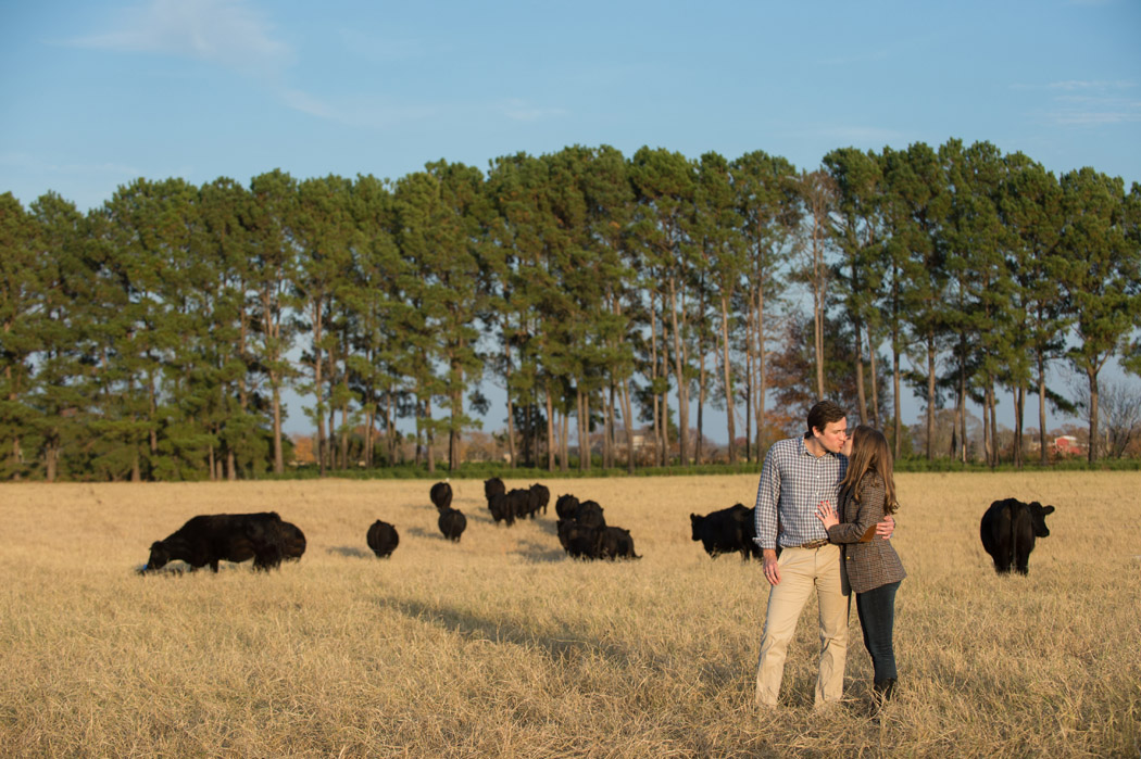 couple kissing in a texas ranch pasture with cows